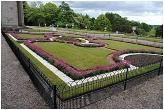 How to Care For Flowering Hedges