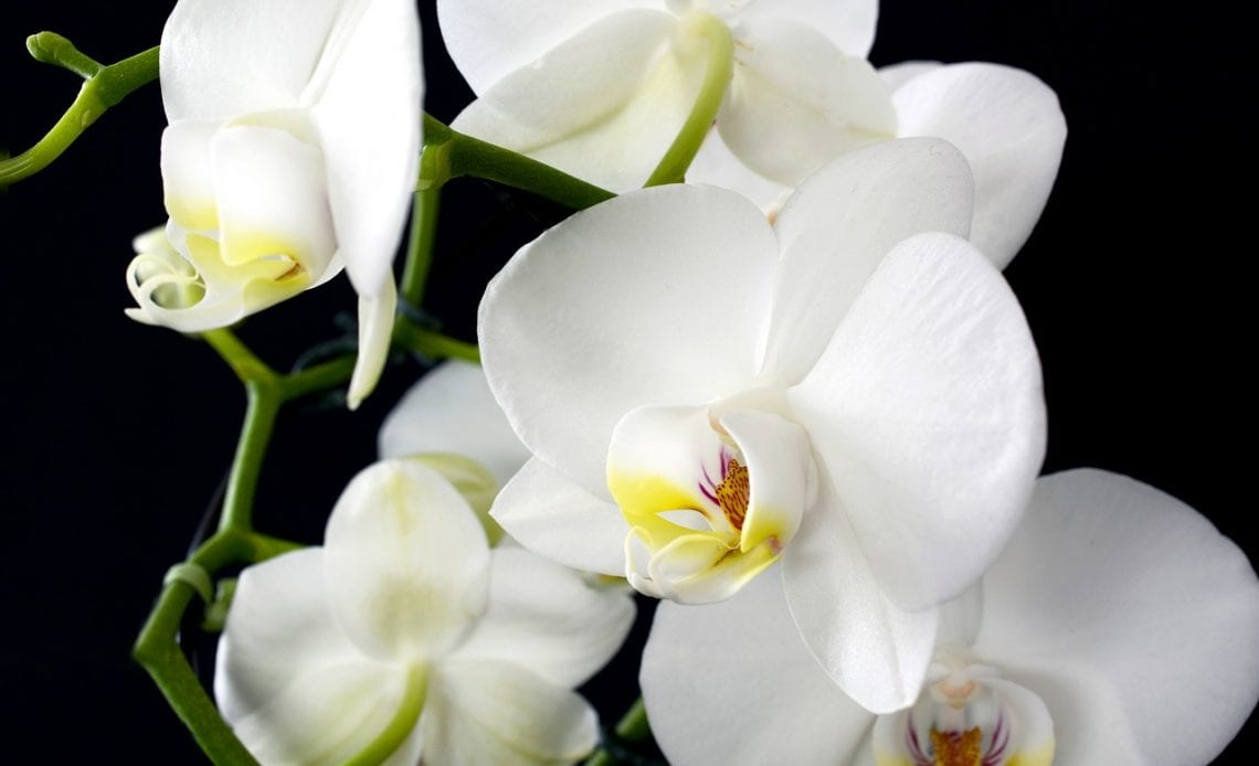 Tropical Flowers You Should Include In Your Wedding Arrangement