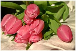 What Makes Pink Lilies Bouquets the Best Wedding Decor